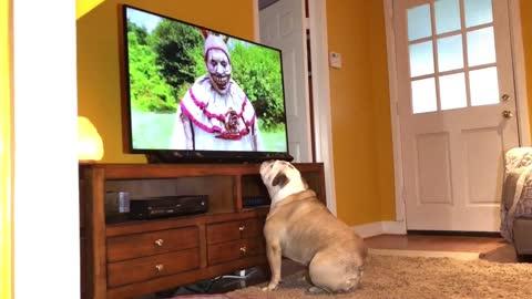 Bulldogs has incredible reaction to killer clown on TV