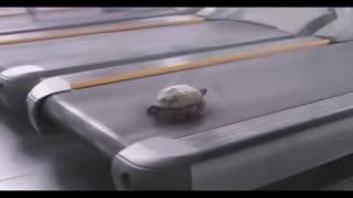 Turtle running on a treadmill