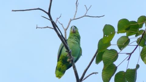 beautiful birds singing (7)