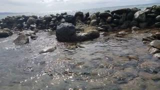 A Sea Turtle Swims Away