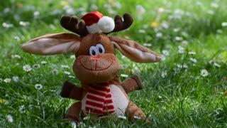 A Funny Moose