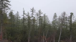 Wildlife. Forest.