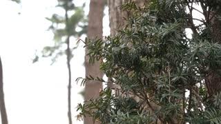 Tree scenery in gloomy weather 2