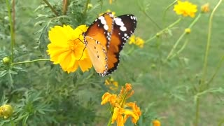 beautiful butterfly 🦋