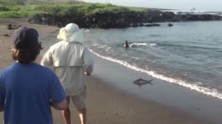 Sea Lion chases baby shark onto beach!