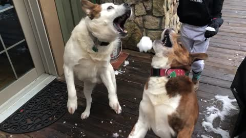 Cute mutts both miss snowball in slow motion