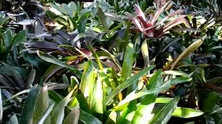 Advanced Bromeliads 5