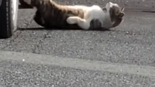 Watching Japanese cats spread to the world