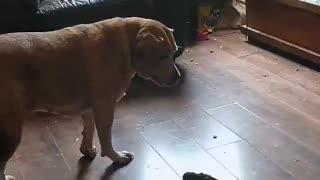 Bird Shows Dog Whose Boss
