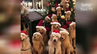 Best funny Video 2021 christmas dogs