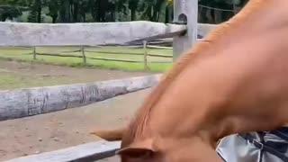 Woke Horse