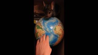 chinchilla on the GLOBE
