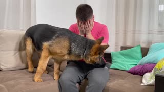 German Shepherd Puppy Reaction to Me Cryings