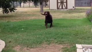 Hank is a smart dog