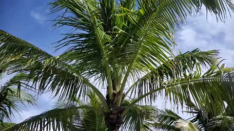 "Lauderdale-by-the-Sea ""outside of ARUBA bar & restaurant"""
