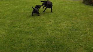 Doggie Play fun