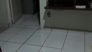 funny high jumping cat