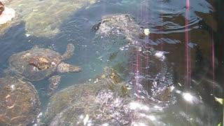 turtles eat