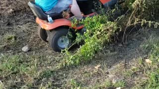 Mowing Down a Tree With a Lawnmower