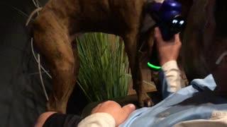 Dog Enjoys Delightful Massage
