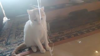 Indoor cat named annual