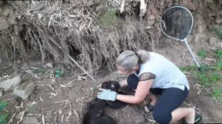 Baby Monkey Rescued and Returned to Family Group