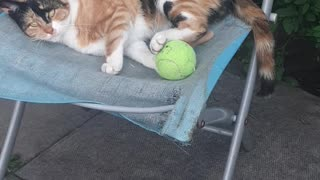 Hyperactive ginger cat on attack mode being protective over ball😹