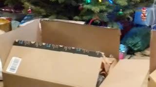 Cat Picks His Favorite Box