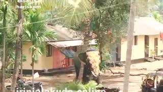 Elephant Rampage at temple Latest Kerala, India