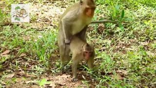 Young Monkey Funny