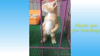 Funny Animal Video | Crazy Video | Cat video.