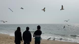 Seagulls competing for eating shrimp snacks