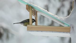 Bird feeder in the park - With great music