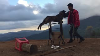 Train a professional dog