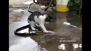 Hilarious 😂😂CATS😂😂😂 Must Watch!!!