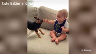 Adorable puppies compilation 2021