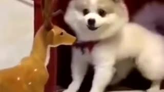 Funny dog 🐕 ever