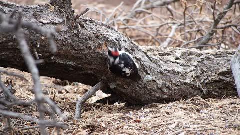 Food Finder Bird Makes Some Tik Tok In Tree Branch