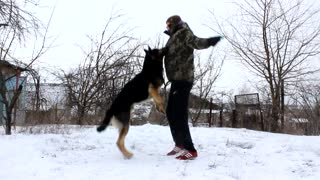 Man and Dog Workout Together