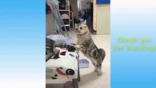 Funny Animals compilation cats & dogs