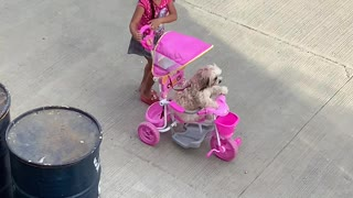 Girl Takes Dog for Stroll