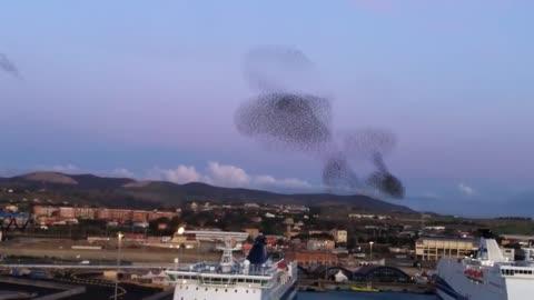 Massive flock of birds create incredible natural phenomena