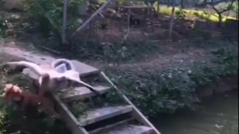 funny dog with Geese