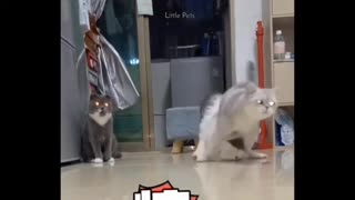 PETS COMPILATION FUNNY VIDEOS