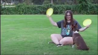 Disc tricks with Bear