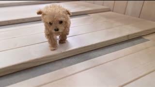 Cutest puppy ever seen