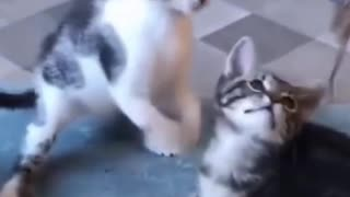 FUnny little Kittens Playing with Kittens