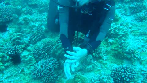 Scuba Diving leading Dives