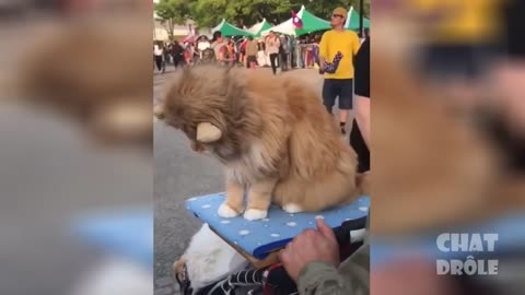 WATCH RIGHT MEOW #2 Cute and Funny Pets... Cats, Dogs Etc...
