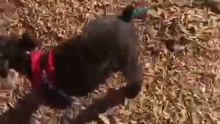 Black dog slides down yellow slide